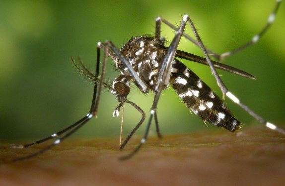Get Rid of Mosquitoes Indoors